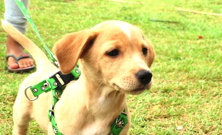 No primeiro dia de campanha, foram vacinados 644 cães