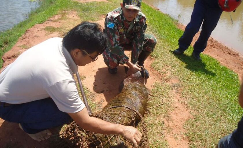 Técnicos examinam e preparam animal para a viagem