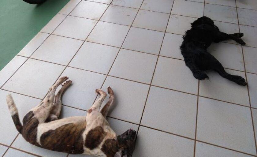 Cães foram envenenados durante ação criminosa, segundo a PM