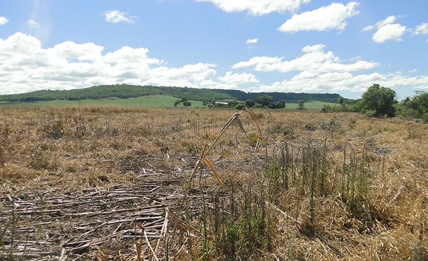 Madeira proveniente do desmatamento não se encontrava mais no local