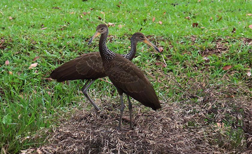Fauna três-lagoense ganha destaque nesta sexta-feira (12)