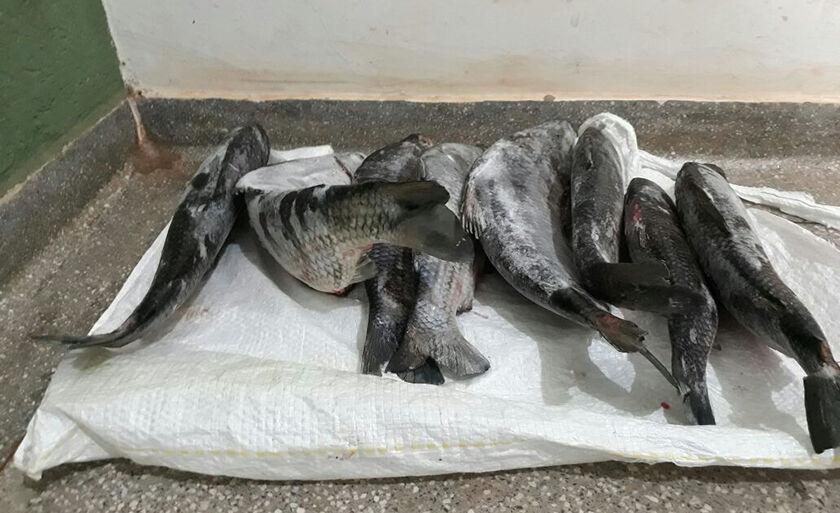 O pescado e o frízer foram apreendidos pela PMA