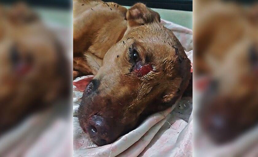 Cachorro está internado em clínica veterinária para recuperação.
