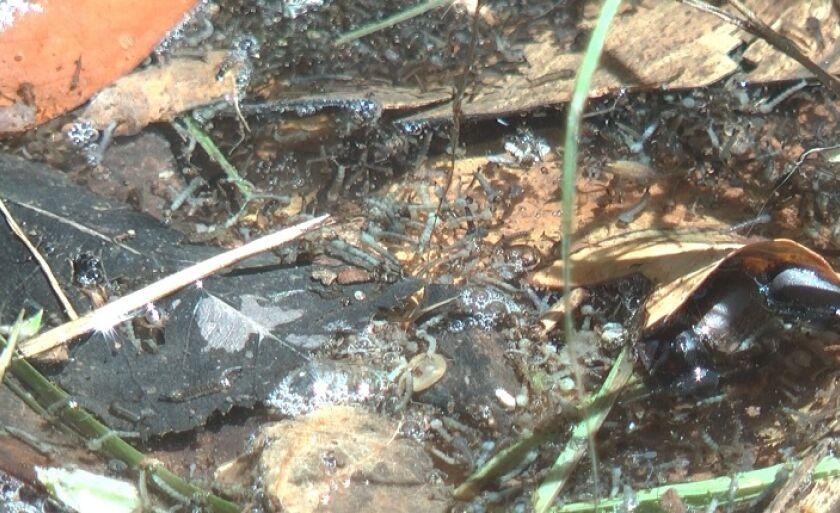 Larvas foram vistas por moradora que passava pelo local