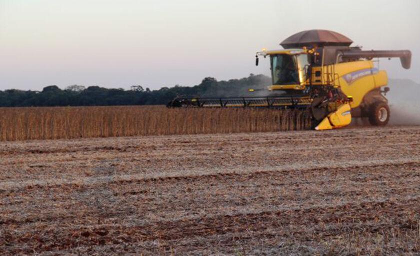 Colheita atingiu 1,95 milhão de hectares da área disponibilizada para o cultivo da oleaginosa