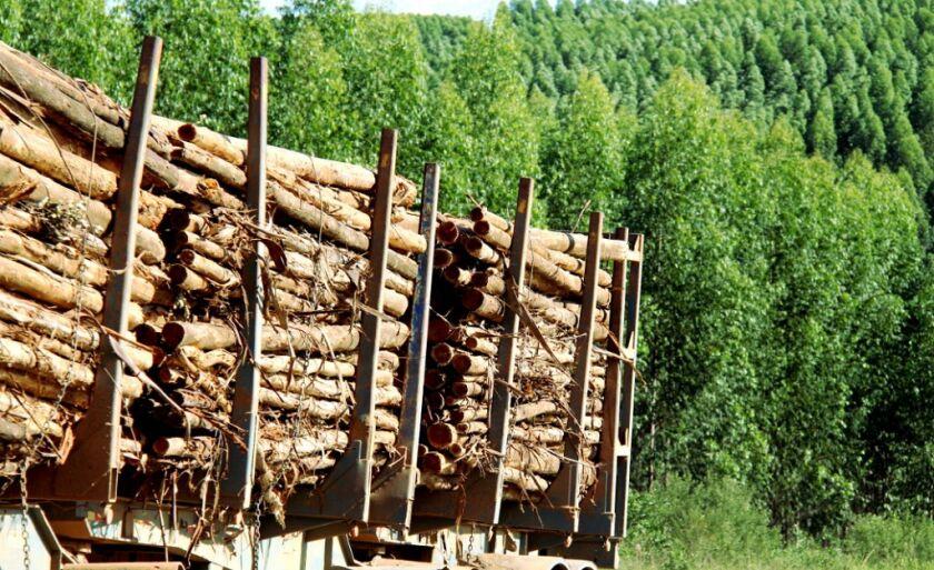 O programa Mais Floresta é um programa de assistência técnica e gerencial, hoje focado em florestas de seringueiras