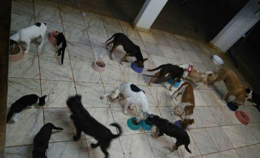 Conforme comunicado publicado na noite de terça-feira mais de 50 de animais precisam desta alimentação