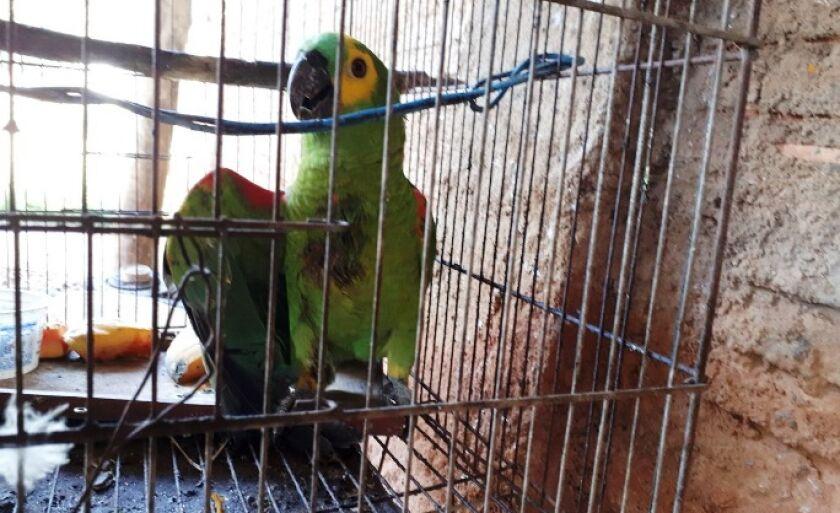 O homem levou o pássaro ferido até a PMA de Três Lagoas e denunciou o crime ecológico
