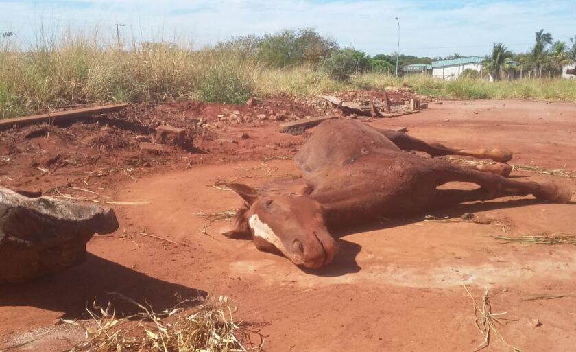 O animal morreu por volta das 14h30