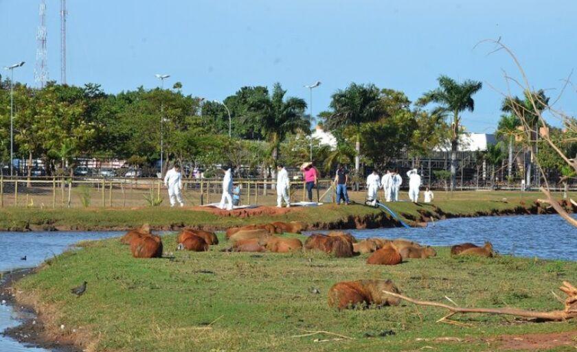 Equipes da Secretaria do Meio Ambiente e do Centro de Controle de Zoonoses (CCZ) de Três Lagoas realizaram um trabalho para a captura de carrapatos no gramado da Lagoa Maior