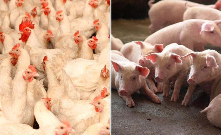O aumento deve permanecer por dois meses, pois o produtores devem recompor a produção afetada pela falta de ração e escoamento de produtos.