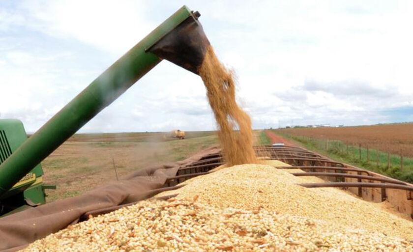 Devem ser produzidos 227,9 milhões de toneladas de grãos no país este ano, 0,1% abaixo do estimado em maio