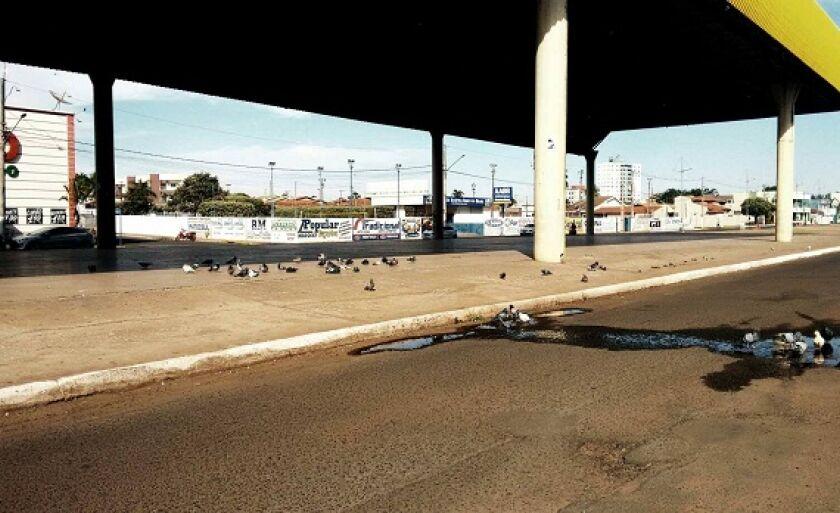 Pombos tomam conta de Centro de Eventos e população reclama de riscos à saúde