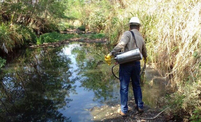 A chikungunya é transmitida pelo mosquito Aedes Aegypti