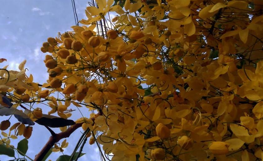 As flores amarelas possuem um charme especial. Essa cor traz luz ao ambiente, significa prosperidade e alegria.