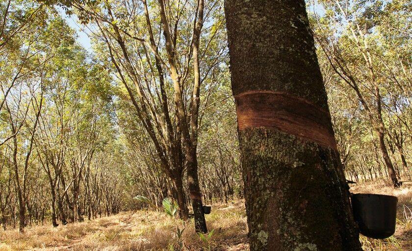 O ciclo de palestras faz parte da AteG (Assistência Técnica e Gerencial) Mais Florestas