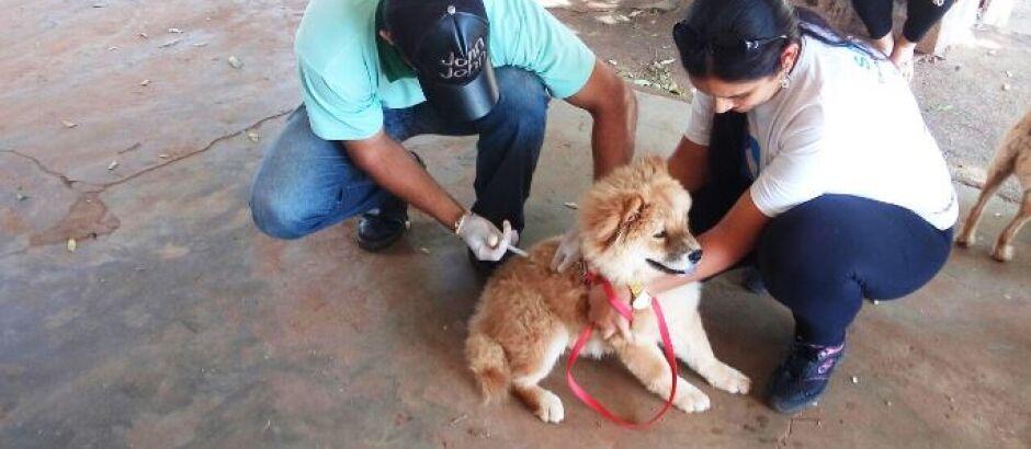 Campanha vacina mais de mil animais em Brasilândia