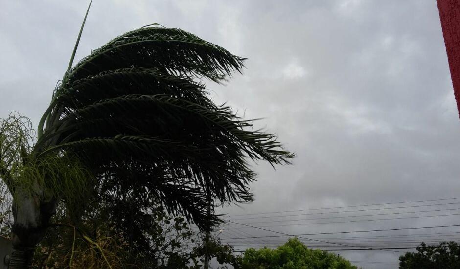 Em vários pontos da cidade houve quedas de galhos de árvore