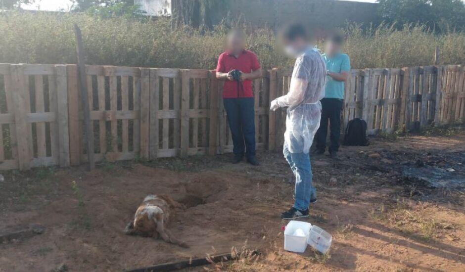 Os três cães que comeram a feijoada morreram em seguida e forma exumados em junho
