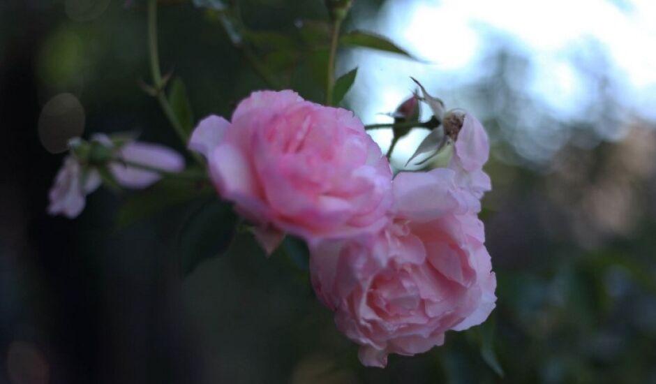 Outubro Rosa, um período de muita reflexão, combate ao câncer e de muita solidariedade.