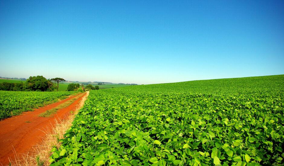 Se não chover até 17 de dezembro, pode haver quebra de produção da soja no MS