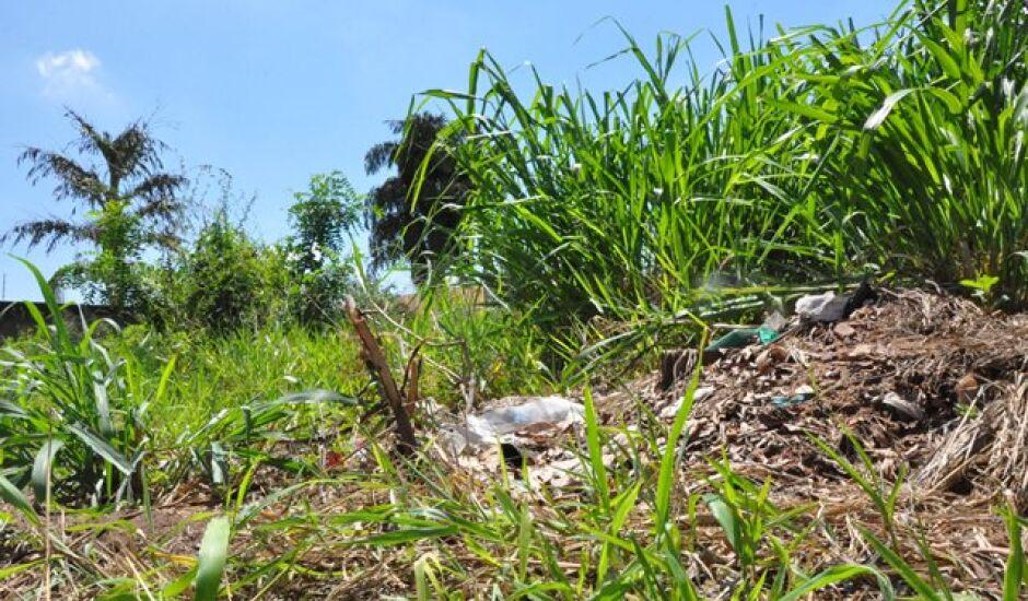 Principal causa do aumento do número de dengue é a falta de limpeza nos quintais e  terrenos baldios