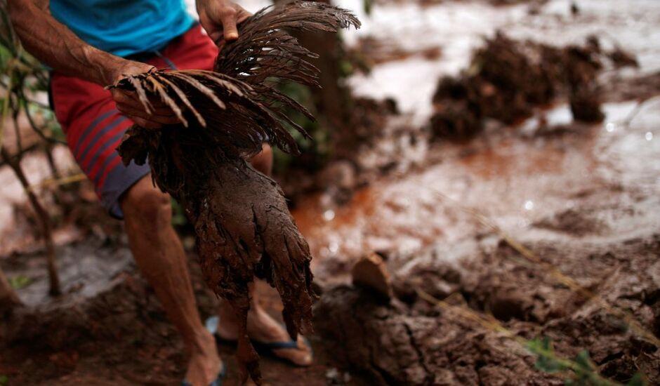 Ave é resgatada da lama em área atingida pelo desastre, em Brumadinho