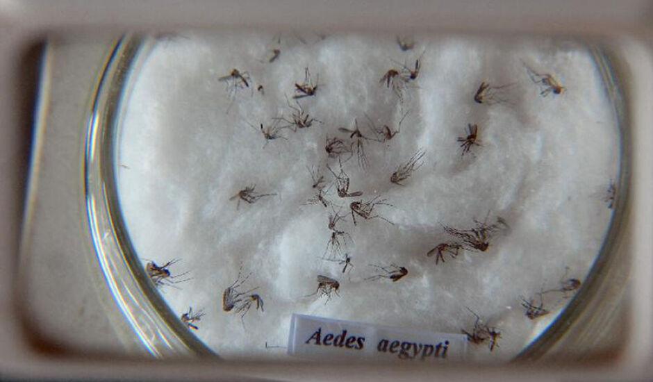 Levantamento mostra que dois estados registraram aumento de mais de 1.000% no número de casos de dengue