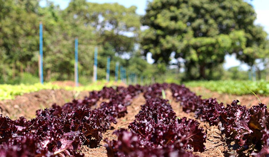 Agricultura familiar, em Três Lagoas, é uma modalidade muito práticada