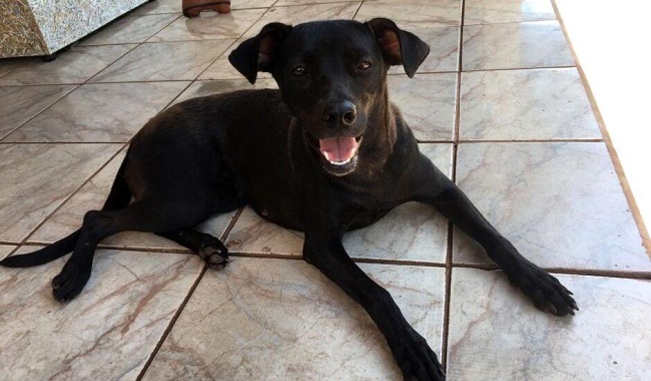 A cadela Kiara foi adotada por uma família de Paranaíba